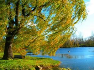 tree-1024x768