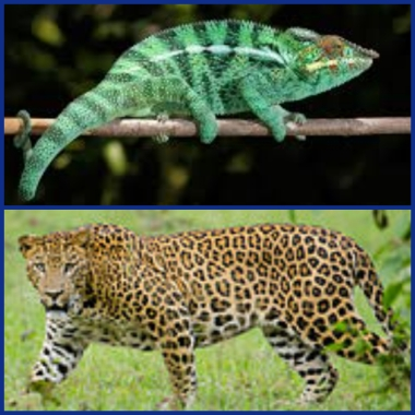 chameleon and leopard